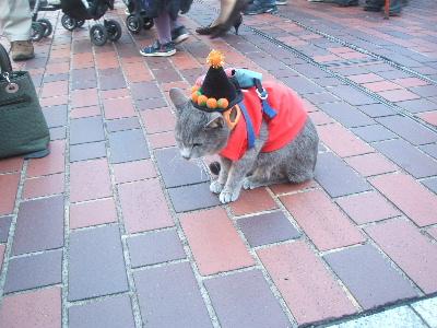ハロウィンの猫ちゃん